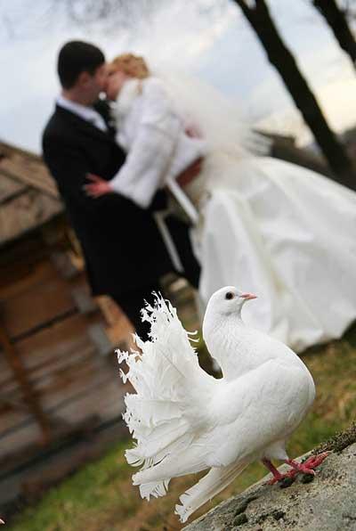 Весільні голуби освячують кожне