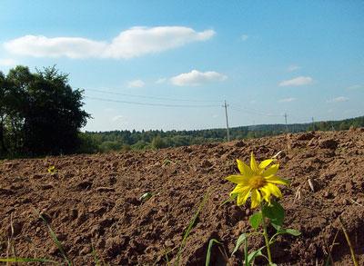 """Представники Закарпаття їдуть на установчий з""""їзд Всеукраїнської асоціації сільських та селищних рад"""