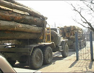 Держкомлісгосп вважає, що вирубки в Карпатах не перевищують ліміту і лісу стало більше