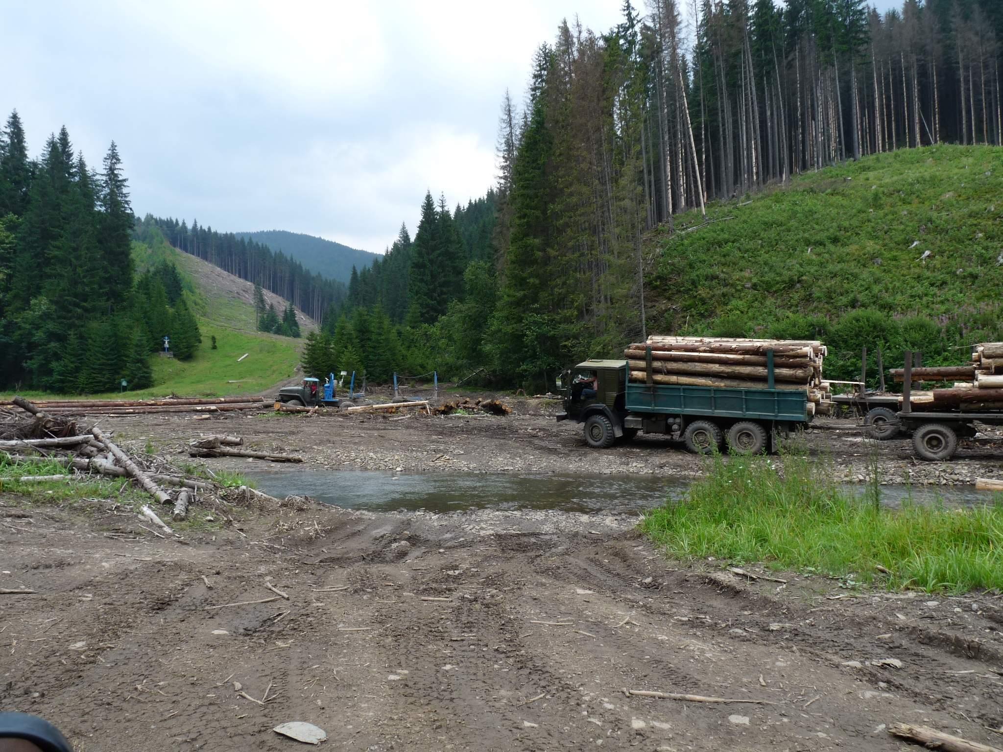 Вирубка лісу в Карпатах має катастрофічні наслідки для екології Європи.
