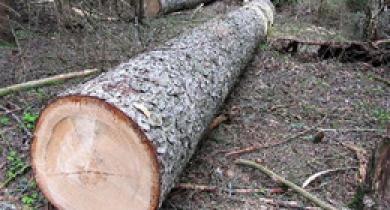 Працівника лісгоспу вбило деревом через порушення технологічного процесу та невиконання інструкцій