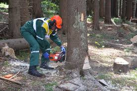 На Закарпатті під час робіт у лісі загинуло двоє чоловіків