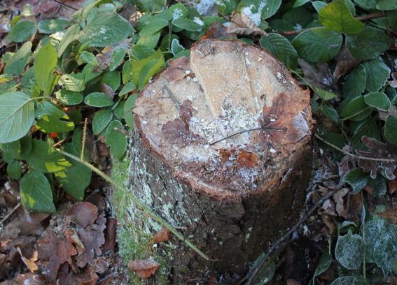 На Закарпатті розслідують 90 фактів незаконної рубки лісу та 33 – незаконного видобутку корисних копалин