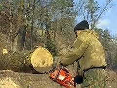 На Хустщині посадовця підозрюють у самовільній вирубці лісу зі збитком державі у майже 200 тис грн