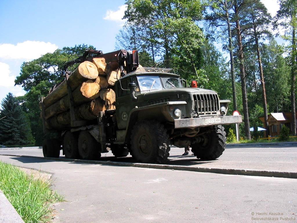 Прем'єр доручив створити робочу групу для перевірки правомірності вирубування лісів на Закарпатті