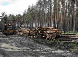 Прокуратура просить повідомляти про факти незаконної вирубки лісів