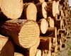 З Перечинського лісгоспу через суд стягують заподіяну лісозаготівельними роботами шкоду у 225 тис грн