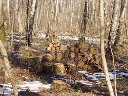 На Воловеччині під час заготівлі дров травмувався юнак, упавши з вантажівки