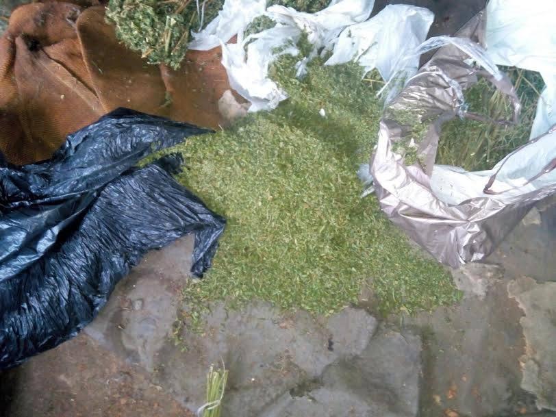 На Ужгородщині під час обшуку виявили понад 2 кг конопель (ФОТО)