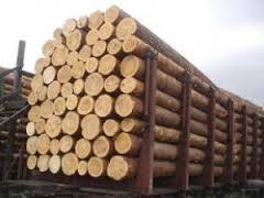 Знову вилучили експортований ліс на понад 170 тис грн, що його везли залізницею
