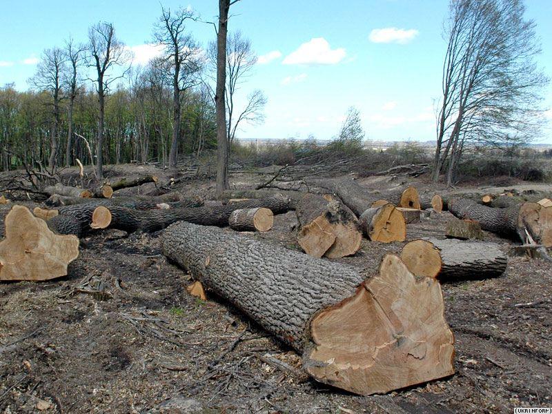 На Закарпатті незаконно вирубано 774 га лісів