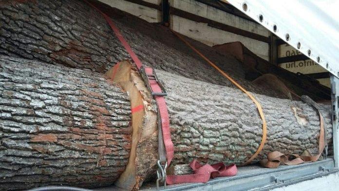 У Нижніх Воротах правоохоронці затримали вантажівку з деревиною без документів