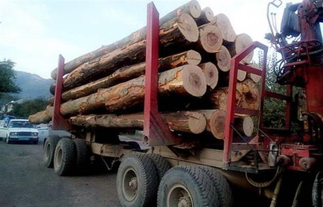 На Тячівщині затримали вантажівку із 40 кубометрами деревини ялини
