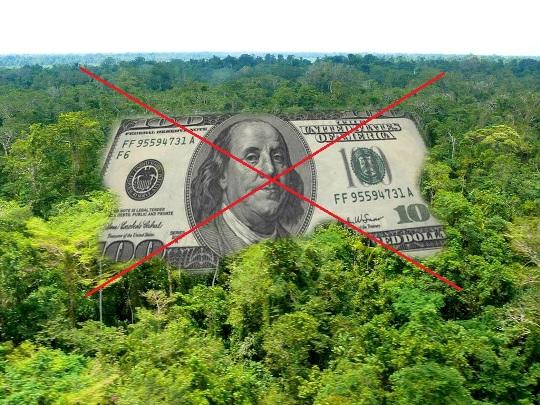 На Закарпатті з нелегальною вирубкою лісів боротимуться мобільні опергрупи