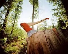 За незаконну вирубку дерев з Ужанського національного природного парку стягнули 830 тис грн