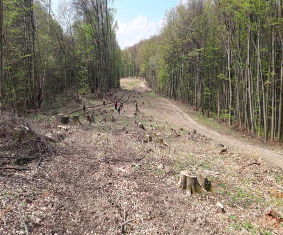 Начальника підрозділу Чопського прикордонного загону за підозрою у справі порубки лісу на 2 млн грн у прикордонні взято під варту