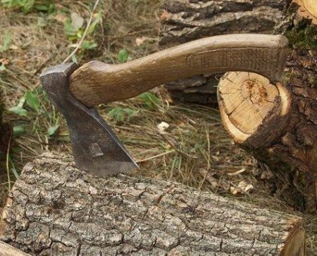 Лісгосп зобов'язали відшкодувати майже півмільйона гривень за незаконну рубку бука та граба