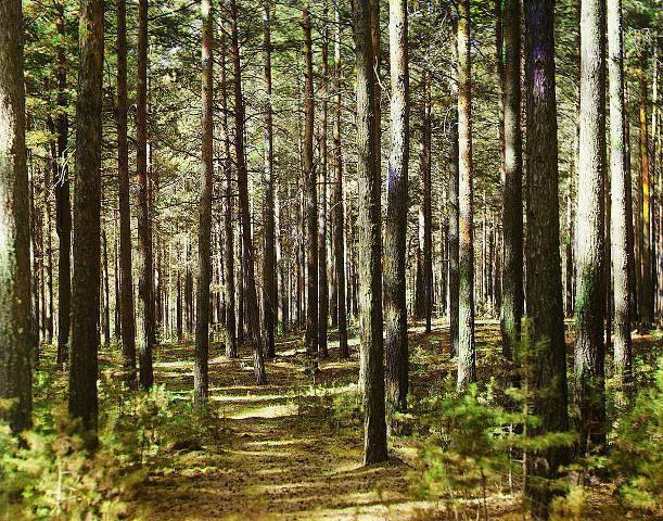 75-річного хворого на епілепсію закарпатця, що заблукав у лісі на Виноградівщині, досі не знайшли