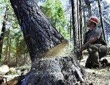 Лісомисливське господарство на Закарпатті нашкодило на 100 тис грн