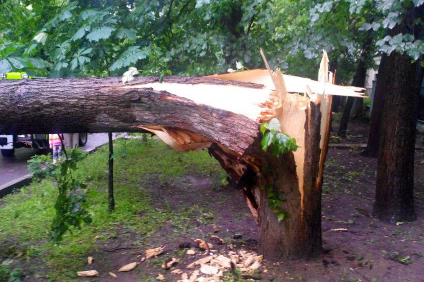 Уночі негода на Тячівщині повалила 16 дерев
