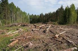 На Закарпатті внаслідок незаконних рубок лісу стягнуто понад півмільйона гривень збитків