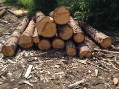 На Закарпатті розпочато кримінальне провадження за фактом незаконної вирубки дерев вартістю в 1,55 млн грн