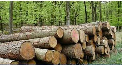 Майстра лісу, який допустив незаконну рубку, засуджено до 1 року ув'язнення