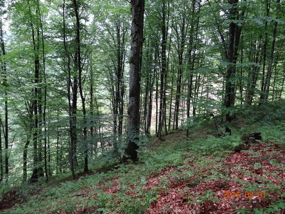 На Хустщині домагаються скасування дозволів на незаконну вирубку близько 700 дерев на площі майже 3 га