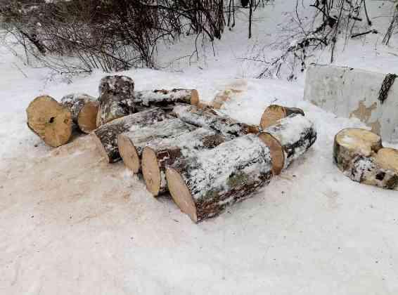На Іршавщині селянин без жодних дозволів зрізав дерева буку на дрова