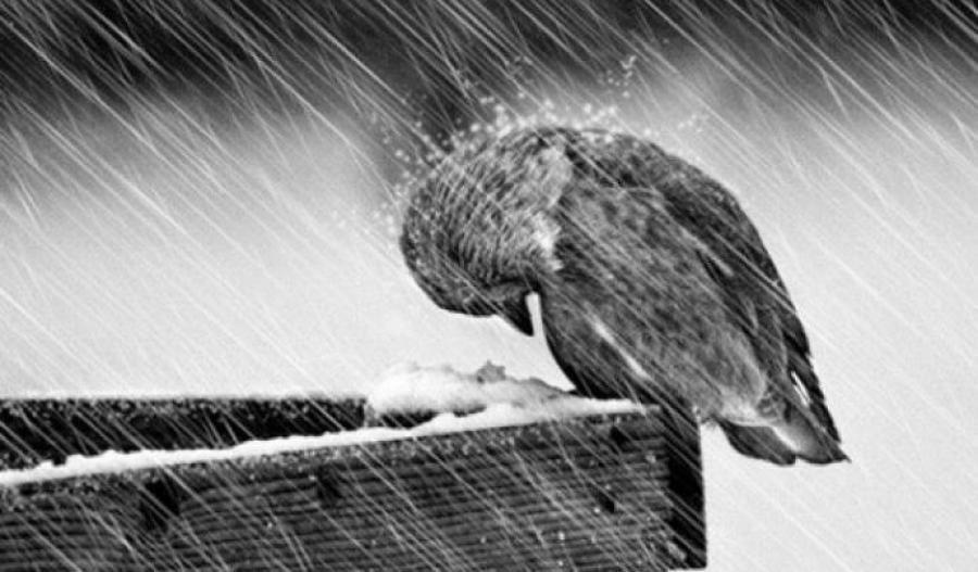 На Закарпаття насуваються інтенсивні дощі з мокрим снігом і хуртовинами