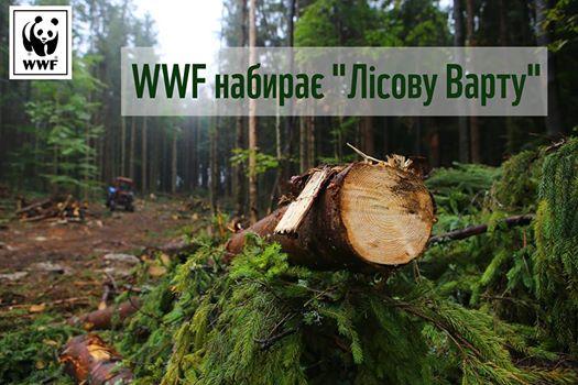 Всесвітній фонд природи WWF шукає координатора волонтерів Лісової варти на Закарпатті