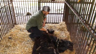 Європейські ветеринари допомагають лікувати ведмедів