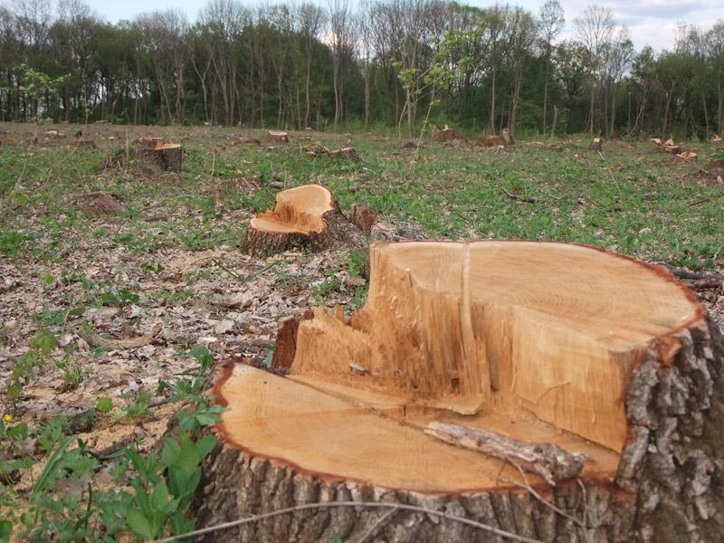 Львівщина. Викрили дерибан 92 ділянок лісу