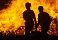 Пожежі на Закарпатті: вогонь лютував на Іршавщині, Синевирі та в Ужгороді
