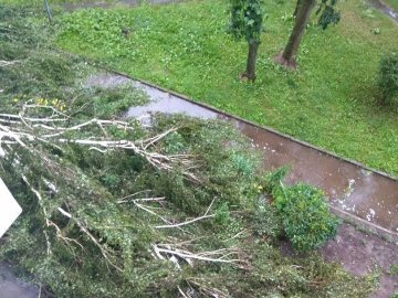 У Закарпатті негода повалила дерева та знеструмила 5 сіл