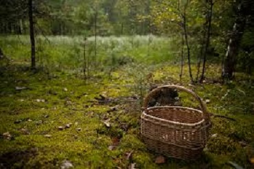На Тячівщині знайшли тіло грибника із вогнепальним смертельним пораненням
