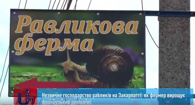 Уже цієї осені власник єдиної равликової ферми на Закарпатті планує реалізовувати свою першу продукцію на ринках Європи