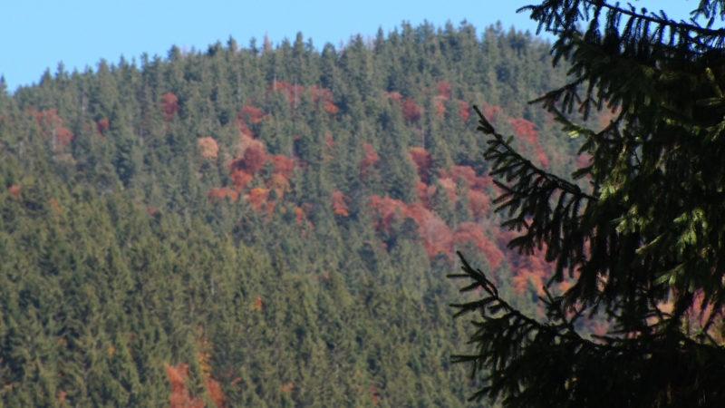 На Закарпатті – пік осіннього туристичного сезону (ВІДЕО)