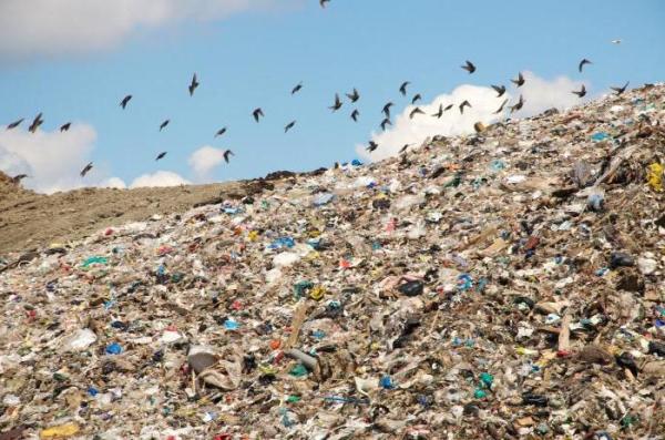 Централізованим збиранням твердих побутових відходів охоплено близько 80% населених пунктів Закарпаття