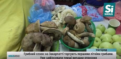 Уже 2 випадки отруєння грибами зафіксовано на Закарпатті (ВІДЕО)