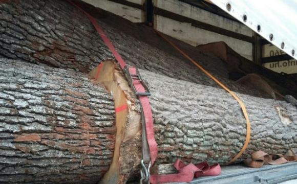 Затримали вантажівку із сумнівною деревиною