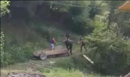 За жорстоке поводження з конем, що призвело до його загибелі, судитимуть місцевого мешканця