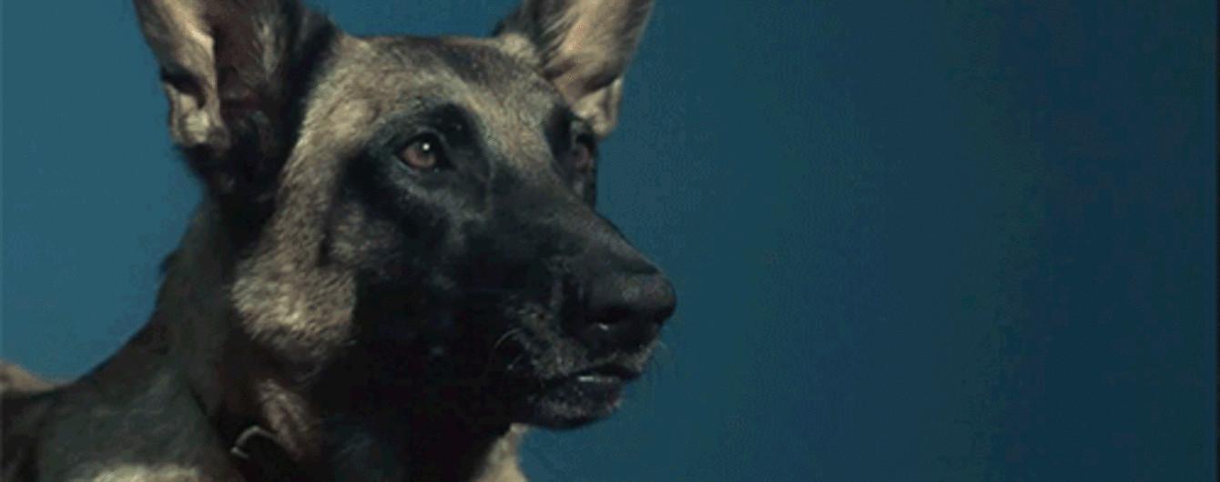 В Іршаві у собаки виявили сказ