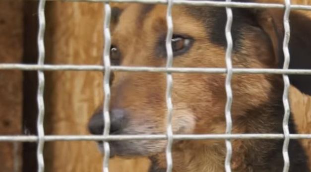 На Мукачівщині пес практично відгриз ногу господареві (ВІДЕО)