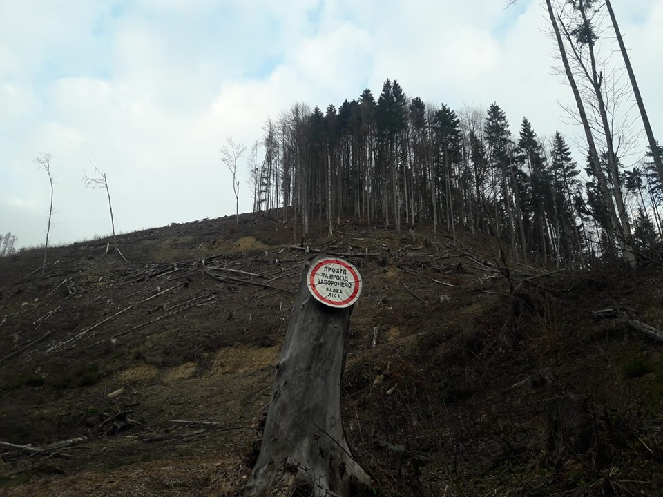 """Лісова """"годівниця"""": чи дочекаються Карпати галузевих реформ?"""