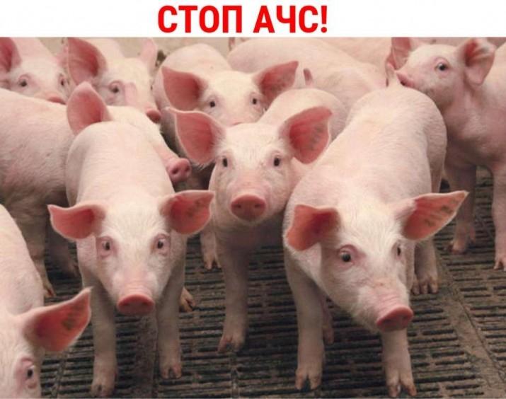 На Закарпатті посилили контроль за переміщенням свиней і свинопродукції