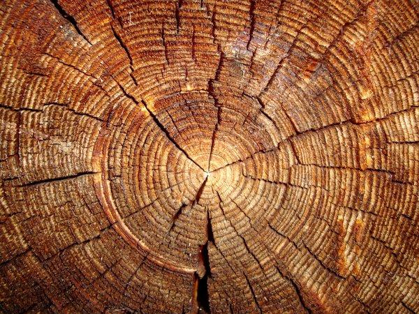 За допущені незаконні рубки зі збитками у понад 8,5 млн грн судитимуть посадовців Хустського лісгоспу
