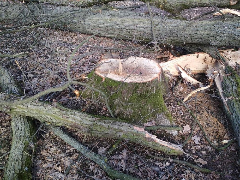Під час перевірки у Берегівському лісгоспі виявили численні порушення (ФОТО)