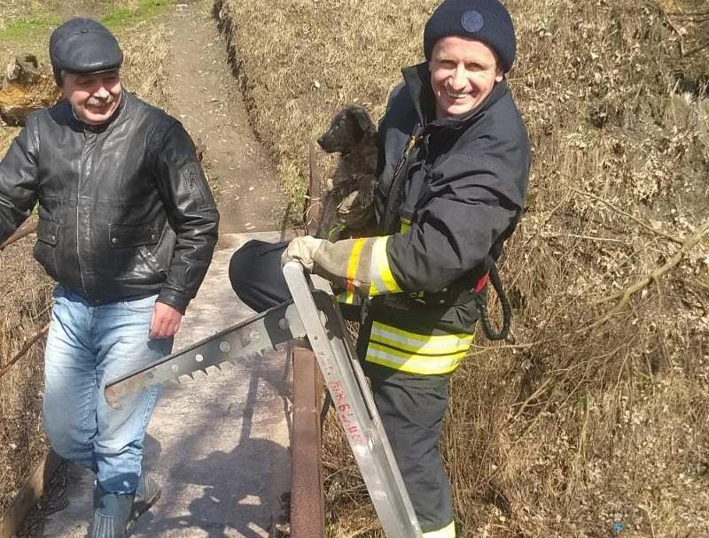 ФОТОФАКТ. У Воловці рятувальники врятували песика зі сміття в річці