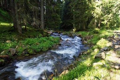 Постійний комітет Бернської конвенції вніс долину річки Шопурка на Закарпатті до Смарагдової мережі